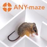 any maze